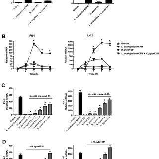 H. pylori 251 blocks the induction of IFN- ␤ and IL-12 in