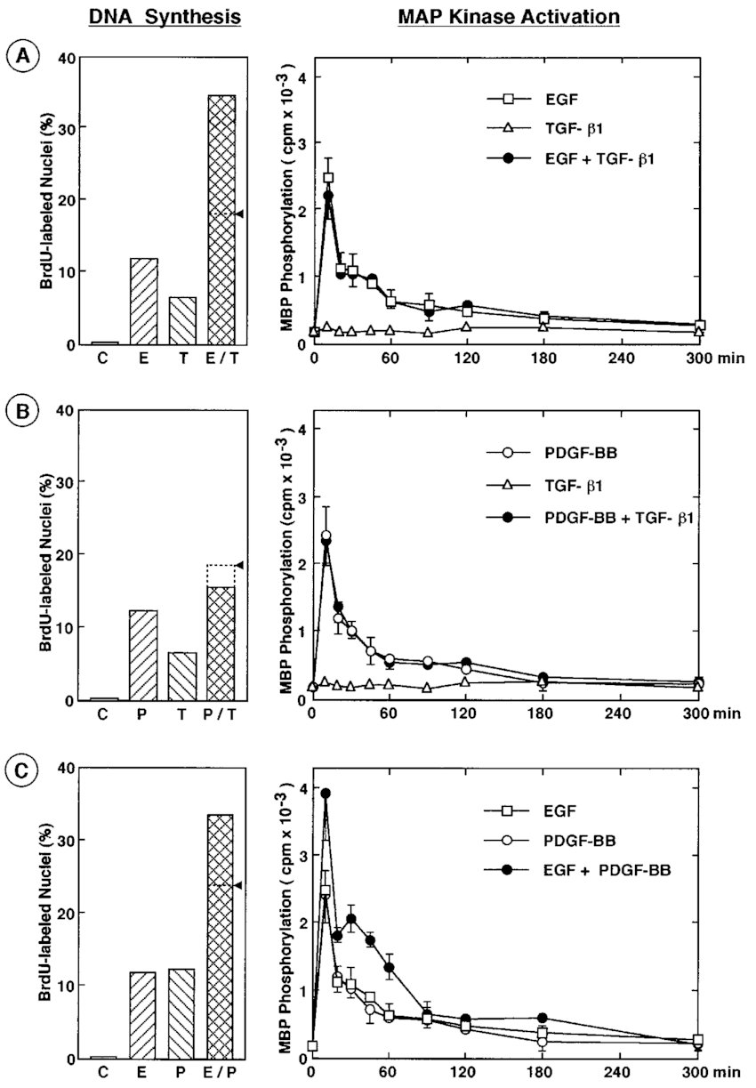 Effect of combinations of growth factors on DNA synthesis