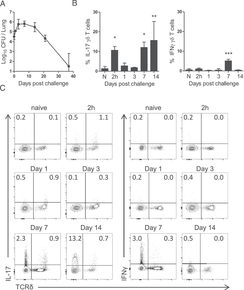 hight resolution of il 17 secreting gd t cells in the lungs of mice infected with b pertussis c57bl 6 mice were challenged by aerosol exposure to b pertussis