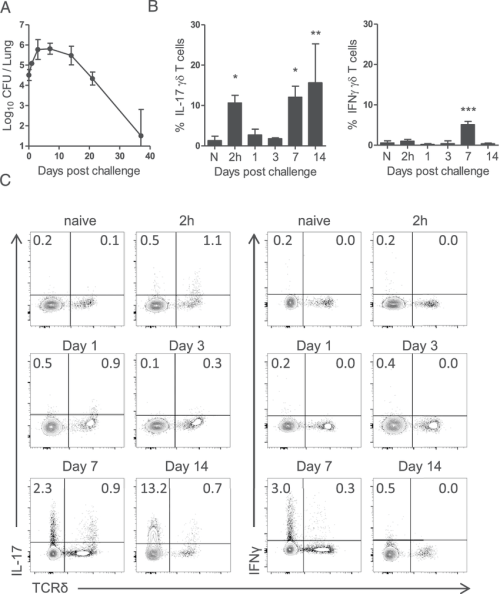 small resolution of il 17 secreting gd t cells in the lungs of mice infected with b pertussis c57bl 6 mice were challenged by aerosol exposure to b pertussis
