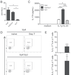 vg4 2 vg1 2 and vg4 gd t cells contribute to innate il 17 production during b pertussis infection vg1 vg4 and vg4 2 vg1 2 gd t cells 1 3 10 5  [ 850 x 1557 Pixel ]