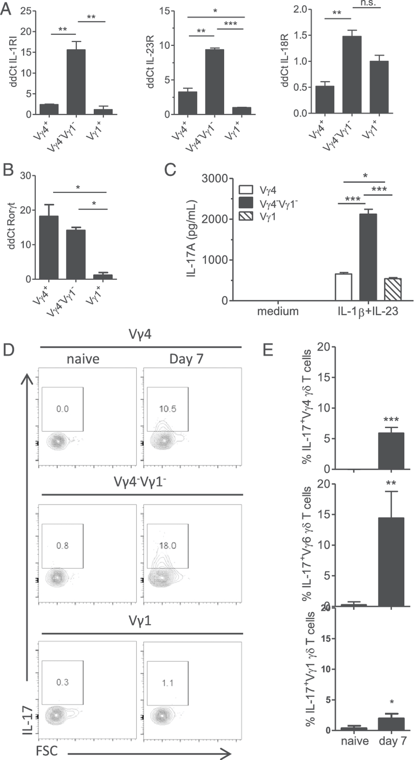 hight resolution of vg4 2 vg1 2 and vg4 gd t cells contribute to innate il 17 production during b pertussis infection vg1 vg4 and vg4 2 vg1 2 gd t cells 1 3 10 5