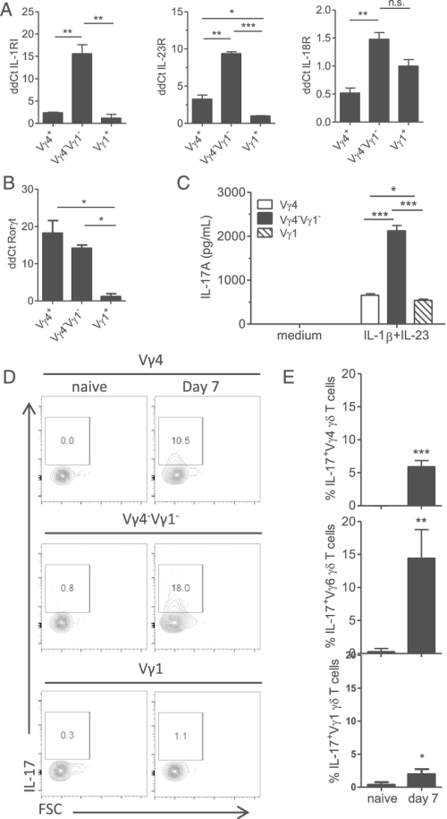 small resolution of vg4 2 vg1 2 and vg4 gd t cells contribute to innate il 17 production during b pertussis infection vg1 vg4 and vg4 2 vg1 2 gd t cells 1 3 10 5