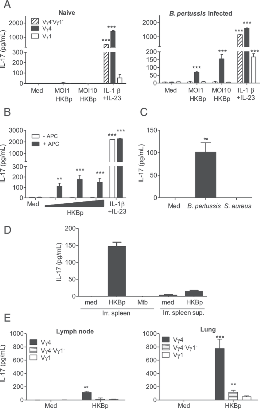 medium resolution of b pertussis infection promotes development of pathogen specific lung resident memory vg4 gd