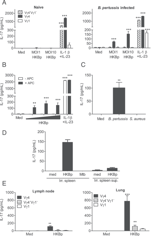 small resolution of b pertussis infection promotes development of pathogen specific lung resident memory vg4 gd