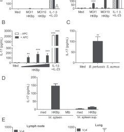 b pertussis infection promotes development of pathogen specific lung resident memory vg4 gd t cells a vg1 vg4 and vg4 vg1 subsets of gd t cells 2  [ 840 x 1314 Pixel ]