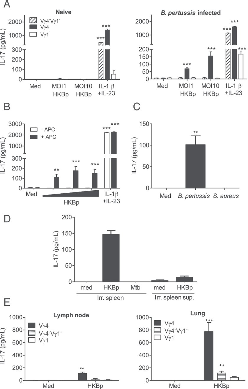 hight resolution of b pertussis infection promotes development of pathogen specific lung resident memory vg4 gd t cells a vg1 vg4 and vg4 vg1 subsets of gd t cells 2