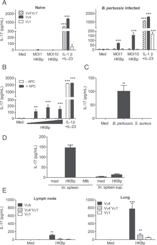 small resolution of b pertussis infection promotes development of pathogen specific lung resident memory vg4 gd t cells a vg1 vg4 and vg4 vg1 subsets of gd t cells 2
