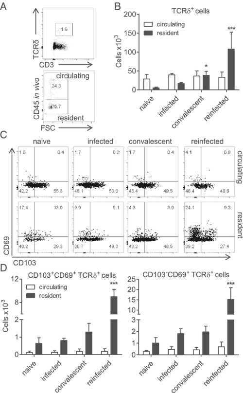 small resolution of cd103 cd69 and cd103 cd69 gd t rm cells rapidly expand in the download scientific diagram