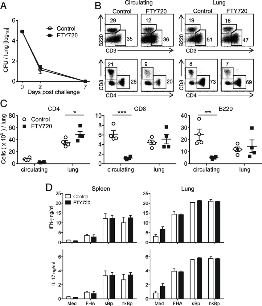 medium resolution of protection against reinfection with b pertussis is mediated by cd4 t cells that are recruited during primary infection and expand in the lungs following