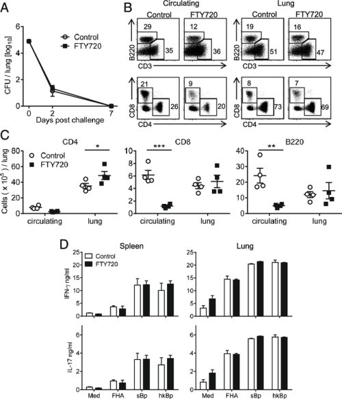 small resolution of protection against reinfection with b pertussis is mediated by cd4 t cells that are recruited during primary infection and expand in the lungs following