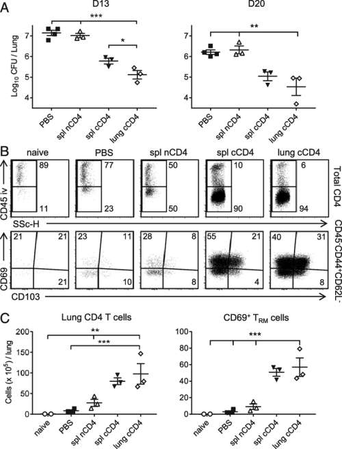 small resolution of b pertussis specific lung cd4 t rm cells transfer protection to naive download scientific diagram