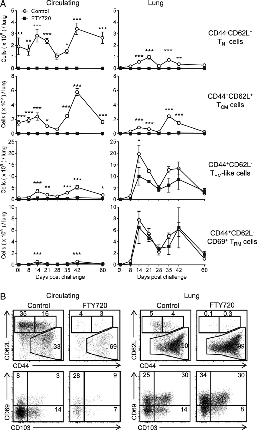 medium resolution of cd4 t cells with a t rmlike phenotype expand in the lung during b download scientific diagram