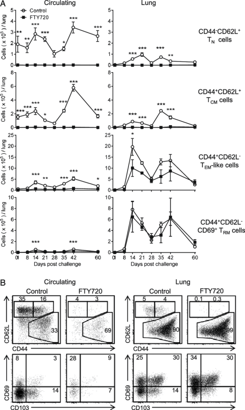 small resolution of cd4 t cells with a t rmlike phenotype expand in the lung during b download scientific diagram