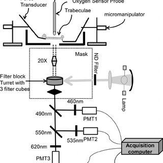(PDF) Restoring redox balance enhances contractility in