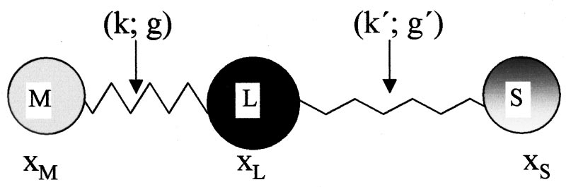 simple atom diagram one line symbols standards model representing three atoms m impurity metal l ligand and s surface connected by two springs with parameters see text k g