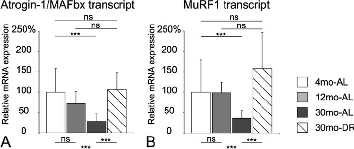 Relative messenger RNA (mRNA) expression levels of muscle