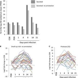 Abundant fungal metabolite accumulation and RNAseq read