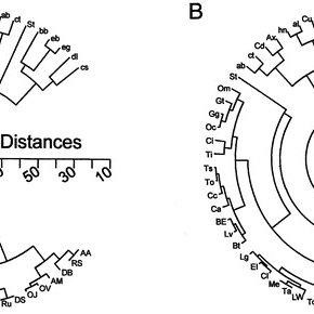 (PDF) Functional Characterization of Ungulate Molars Using