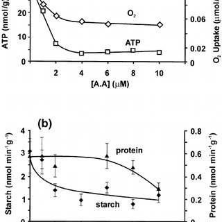 Interconversion of sucrose to starch in developing