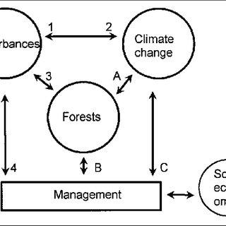 (PDF) Climate Change and Forest Disturbances