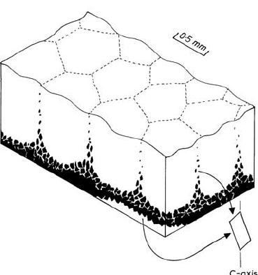 Block diagram of the freshwater (tufa) biofilm constructed