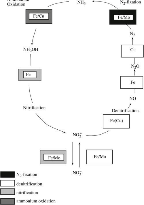 small resolution of diagram showing the nitrogen cycle and the entrainment of metal bearing cofactors in the main