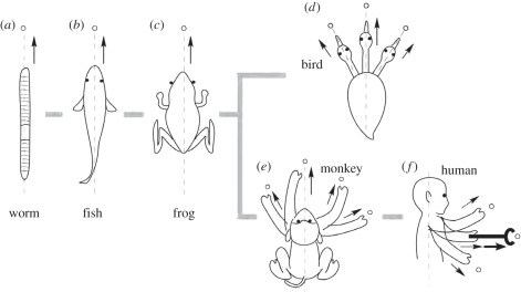 Patterns of reaching-and-grasping movements in different