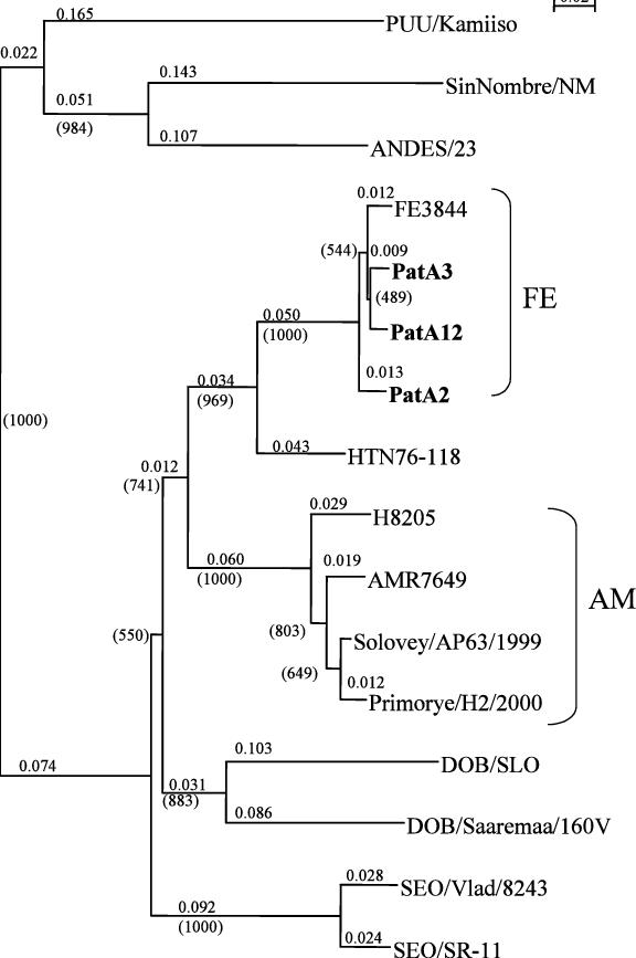 Fig Phylogenetic tree for the M segment of the hantavirus genome ...
