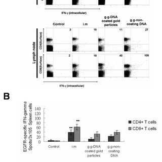 Overexpression of EGFR in LL2 lung cancer cell line. The
