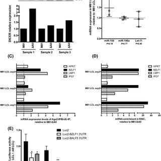 Deletion of the BART miRNAs enhances spontaneous lytic