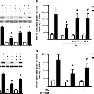 HHcy induced adipose inflammation in vivo . A