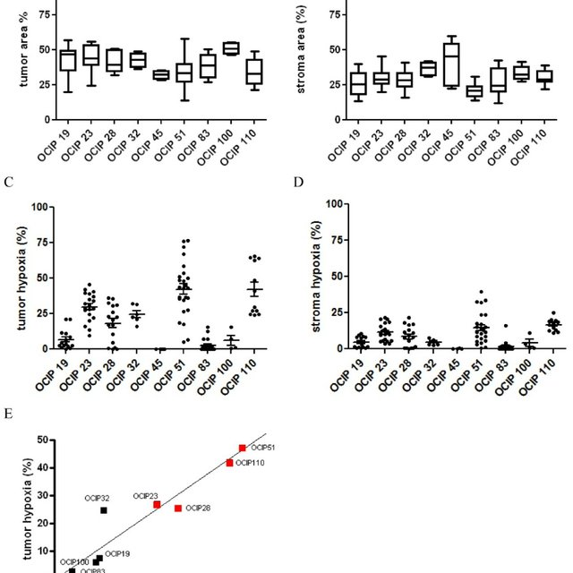 Patient-derived pancreatic xenograft models differ in the