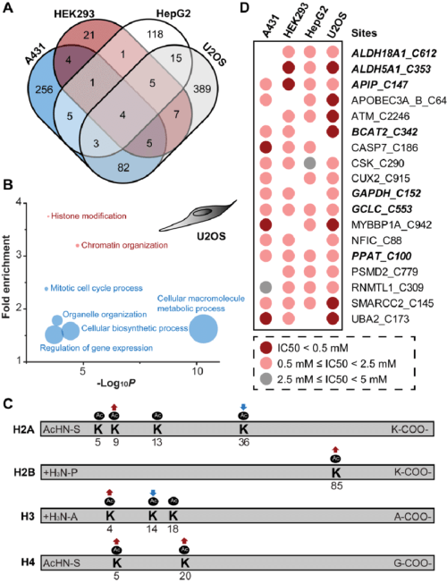 small resolution of cell specific redoxome for sensing h2o2 a venn diagram showing the overlap of potential h2o2sensitive cysteines calculated ic50 values of h2o2 lower