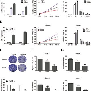 (PDF) MiR-9 targets CXCR4 and functions as a potential