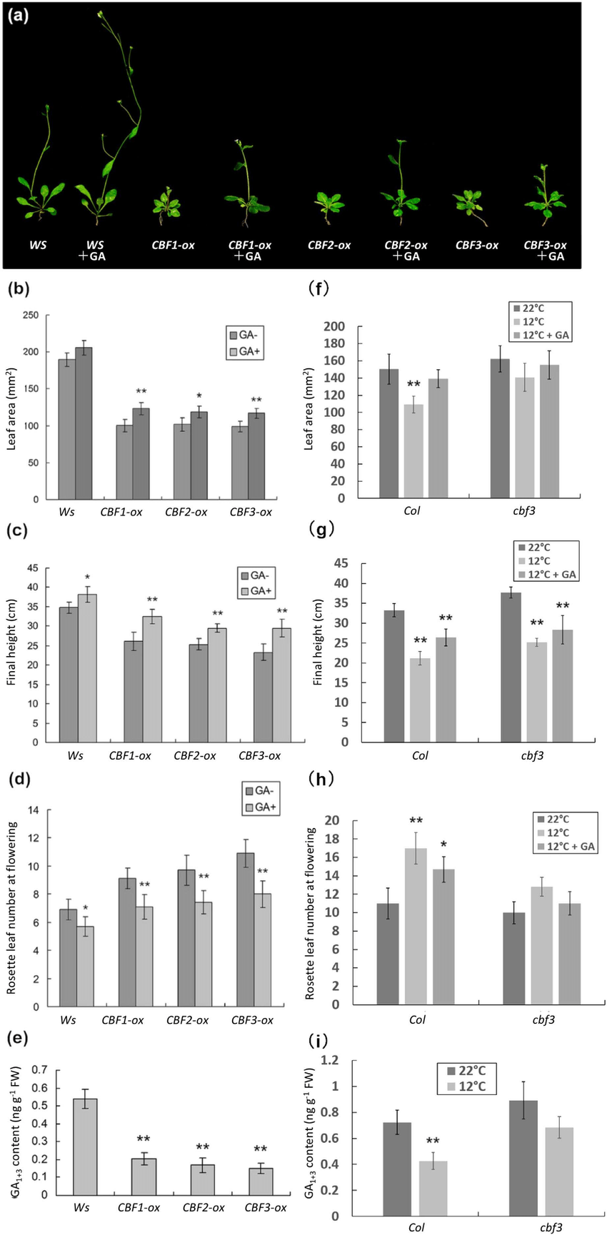 medium resolution of cbf3 suppresses plant growth through negative regulation of bioactive download scientific diagram