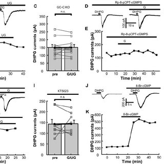 GC-C KO mice exhibit ADHD-like behaviors. ( A ) Plot of