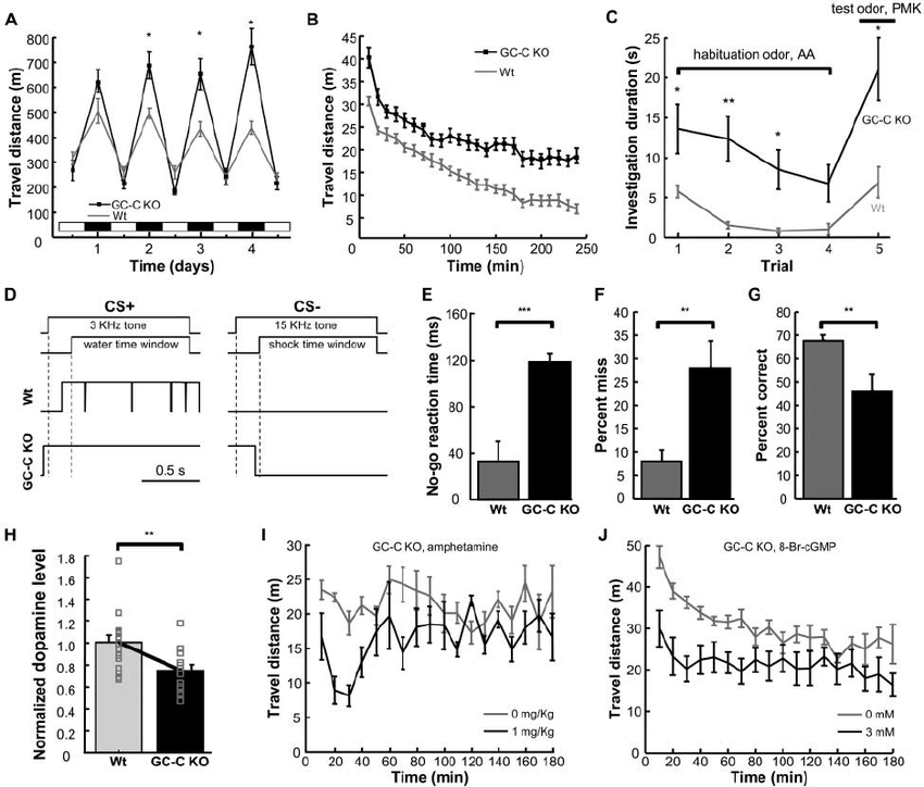 GC-C KO mice exhibit ADHD-like behaviors. ( A ) Plot of