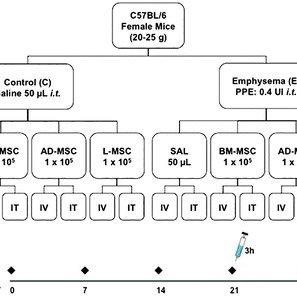 Immunohistochemistry for iNOS ( A ) and arginase-1 ( B