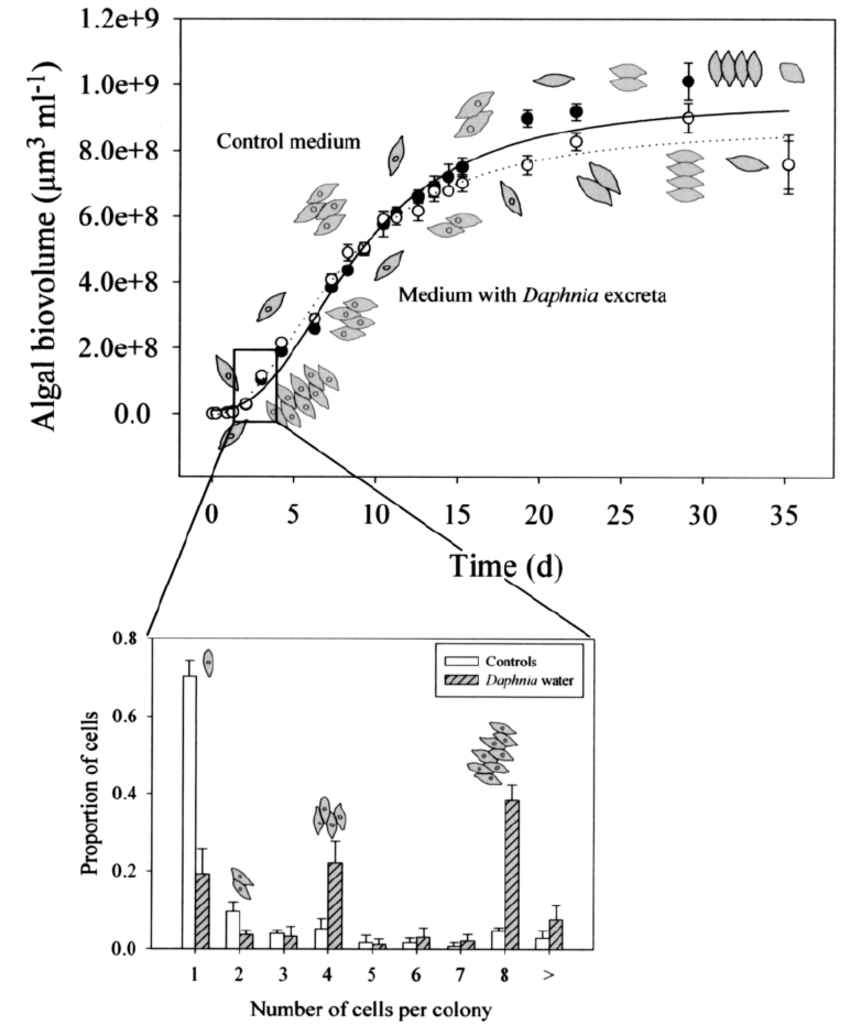 Growth curves for Scenedesmus obliquus grown for 35 days
