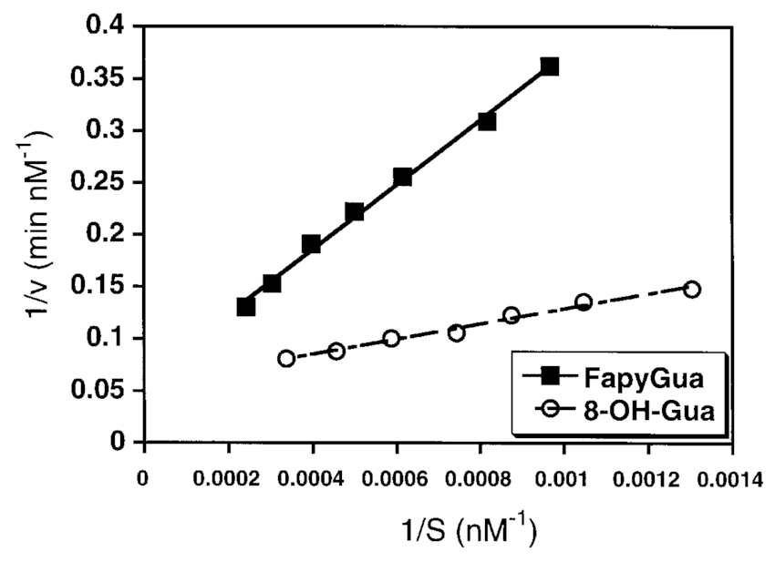 Lineweaver–Burk plots for excision of 8-OH-Gua and FapyGua