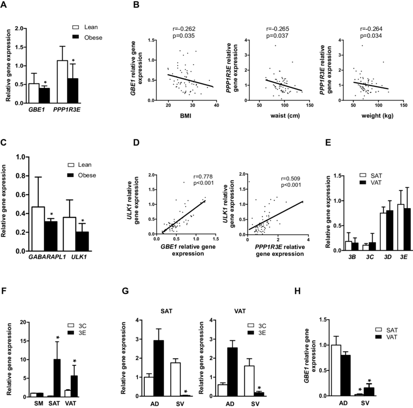 Human obesity is associated with changes in adipose