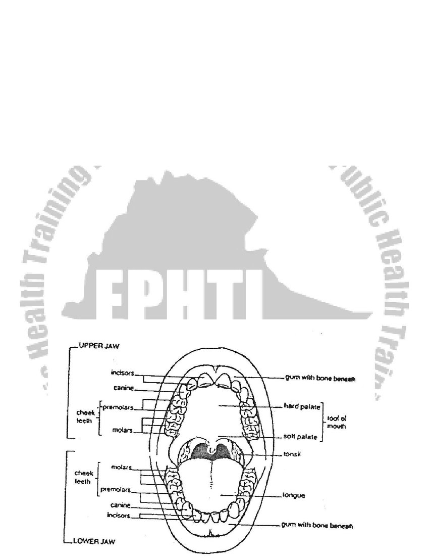 hight resolution of anatomy of the oral cavity