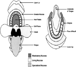 Diagram to show the anatomic location and extent of masticatory, | Download Scientific Diagram