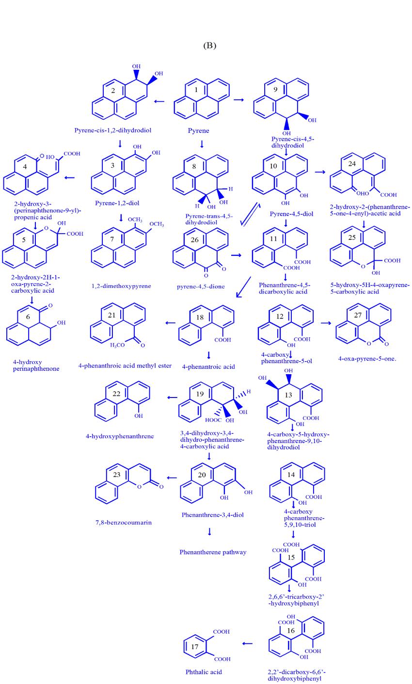 hight resolution of  a catabolism of phenanthrene using microorganism b catabolism of pyrene using microorganism