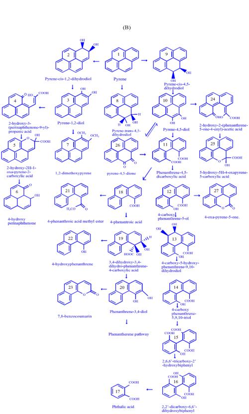 small resolution of  a catabolism of phenanthrene using microorganism b catabolism of pyrene using microorganism