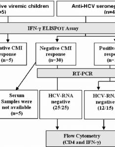 Immune response flow chart also kivanllowriverwebsites rh