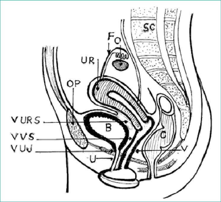 Anatomy of the female pelvis with relations of the urinary