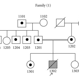 Sequencing exon 3 of SLC2A2 for family (1) showed the