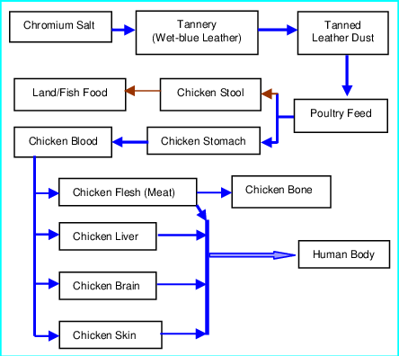 Flow Chart of the Transport Mechanism of Chromium from